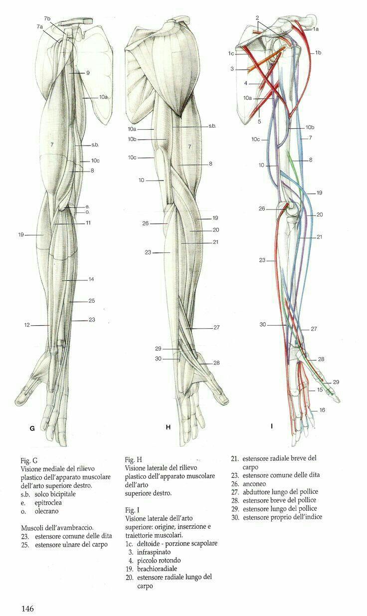 Pin von Eduard Art auf Anatomy | Pinterest