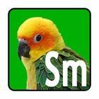 Small Parrot Bird Toys (Conures)