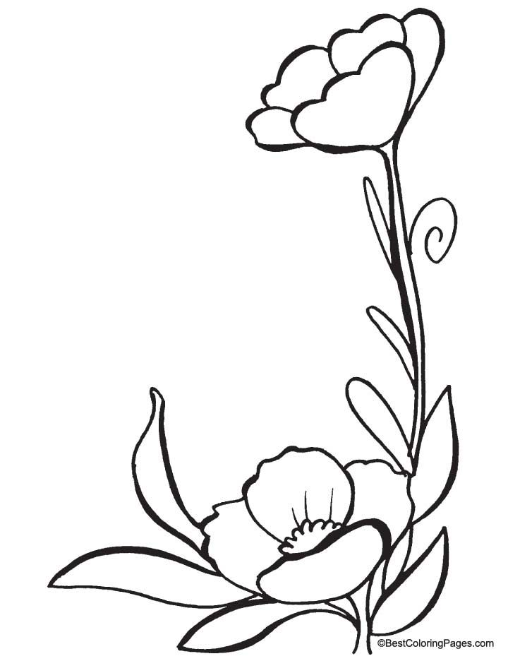 Poppies Colors Two Beautiful Poppy Flower Coloring Pages In The