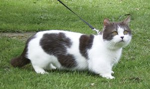 Rug Hugger Cat Breeders Carpet Review