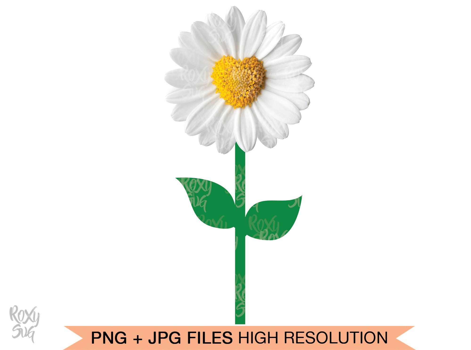 White Daisies Png Images Vector And Psd Files Free Download On Pngtree Flower Graphic Free Watercolor Flowers Flower Drawing