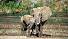 Amazing elephant animals wallpapers