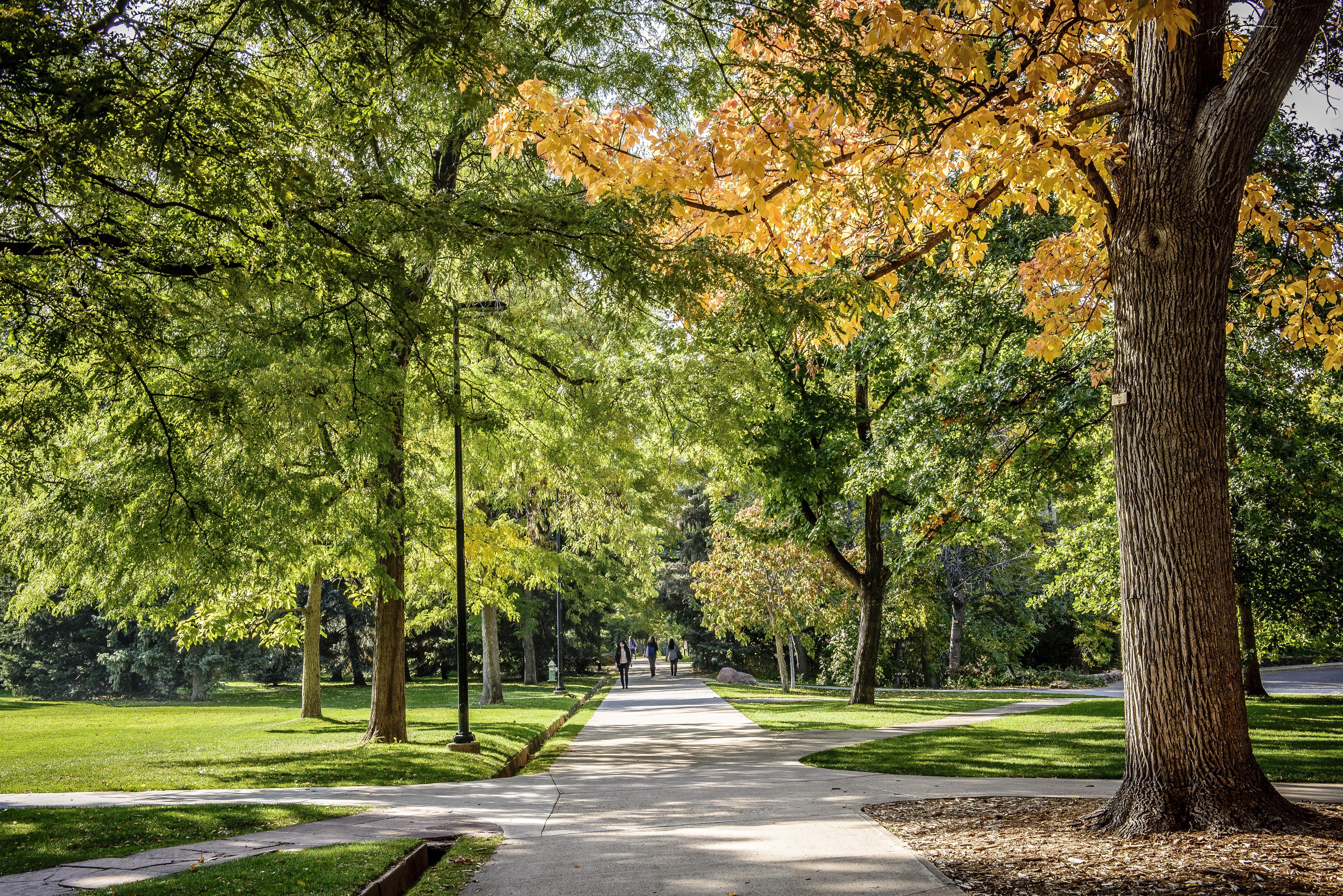 Fall on Campus #Fall #Nature #UniversityofColorado #Boulder ...