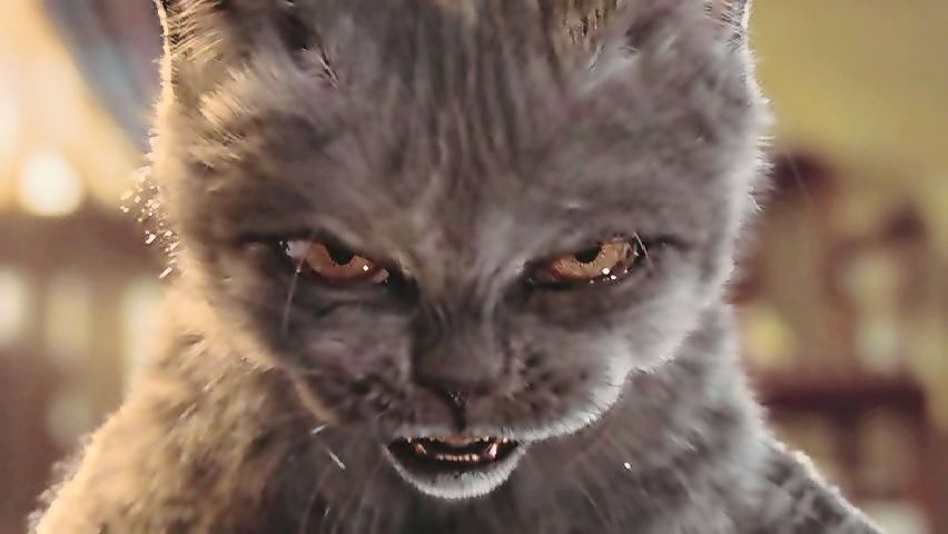 What Cat Are You Like When You Re Angry Evil Cat Angry Cat Memes Cat Memes