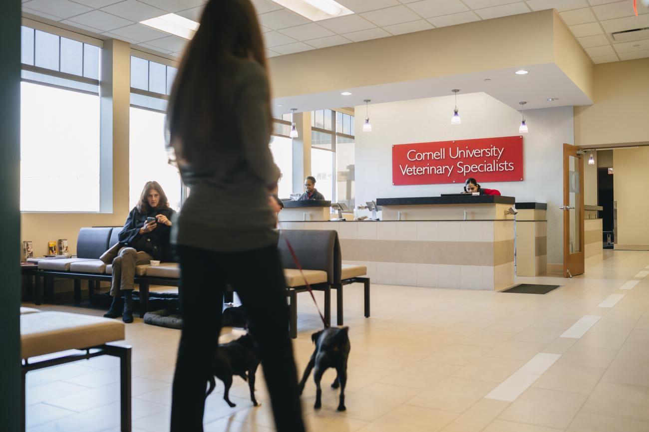 Specialty reception virtual tour veterinary virtual