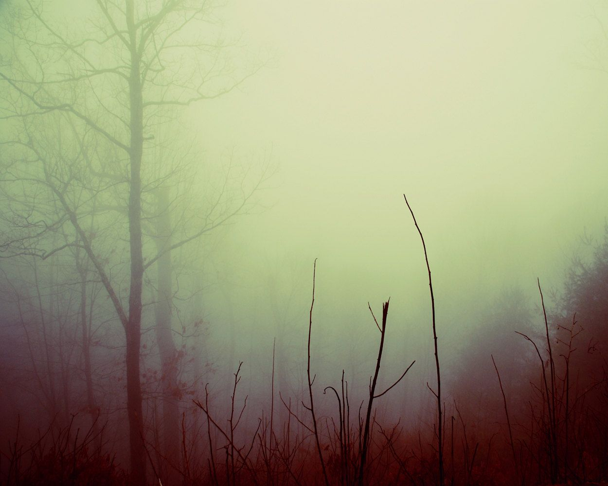 Dreamy Forest Photograph Tree Branches fog 8x10 print foggy misty ...