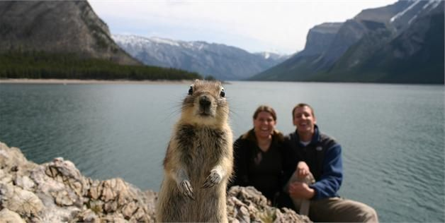 Squirrel, Melissa and Jackson Brandts in Banff National Park (© Melissa & Jackson Brandts/Getty Images)