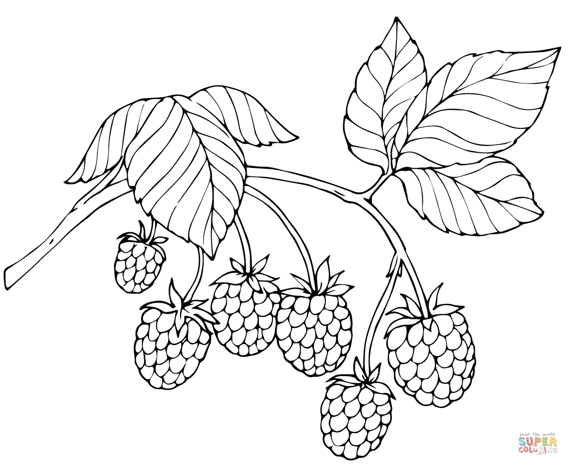 Red Raspberry Coloring Page Free Printable Coloring Pages In 2020 Hand Embroidery Patterns Free Unicorn Coloring Pages Coloring Pages