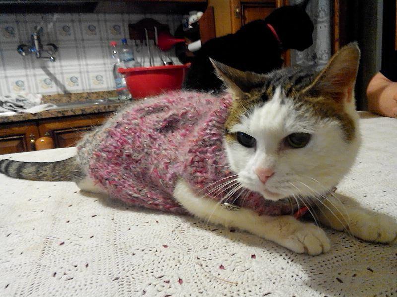 Nuovo cappottino invernale per la Milly *-*