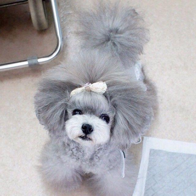 japanese style grooming ermoko's