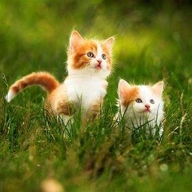 Sweet kittens~