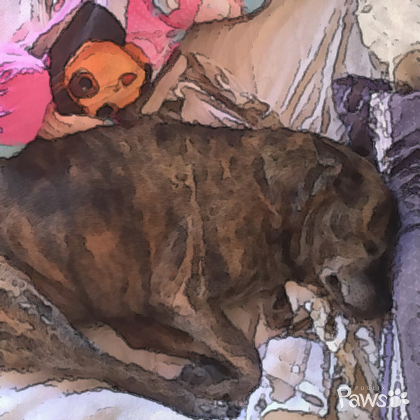 This painted pet portrait was so cute, I had to Pin it. You can make one just…