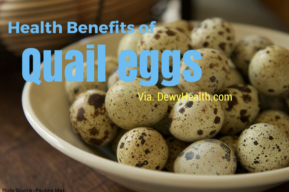 Regular intake of quail eggs gives many health benefits  It