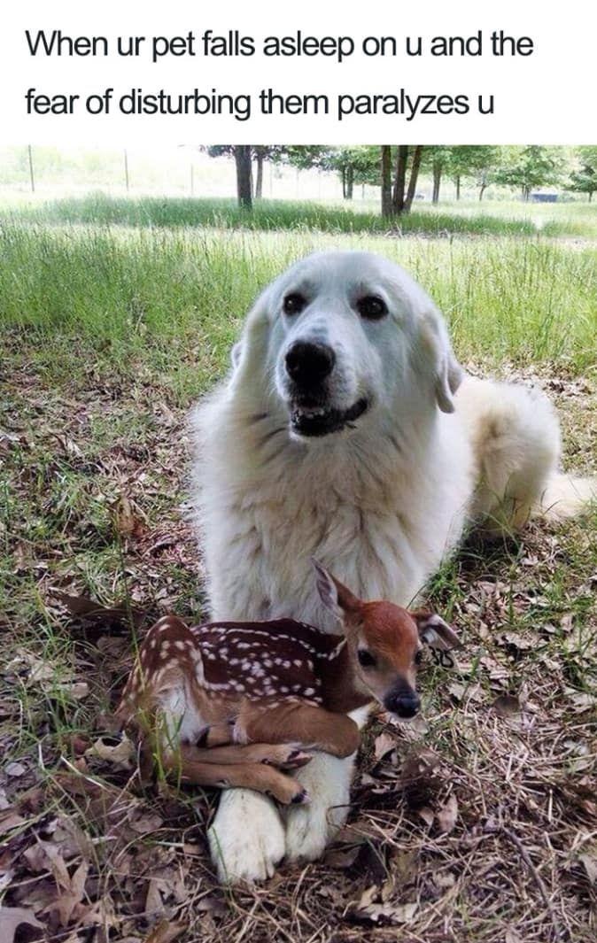 27 Ridiculously Happy Dog Memes To Brighten Your Day Blazepress Funnyhappydog Funny Animal Memes Funny Animals Animal Memes