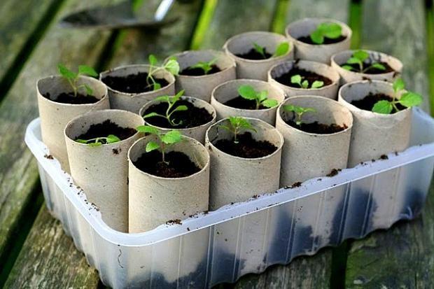 sementeira feita de rolo de papel higiênico - reutilização de materiais recicláveis - ecofriendly