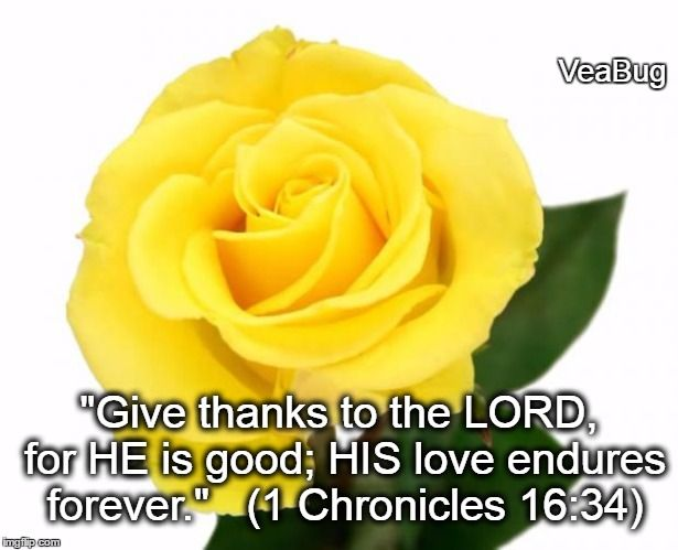 Yellow Rose Of Friendship Meme Generator Imgflip Rose Yellow