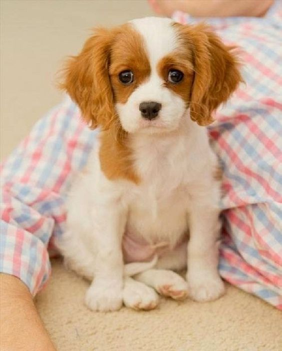 Dog Breeds Best Small Dogs Twitter Phoenix Home Google Dogs Small