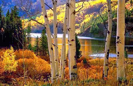"Cataract Lake ~ ""Aspens and Lake in the Gore Range of Colorado"" • by Fred & Joan Hanselmann"