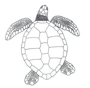 Pin On Sea Turtle Serenity