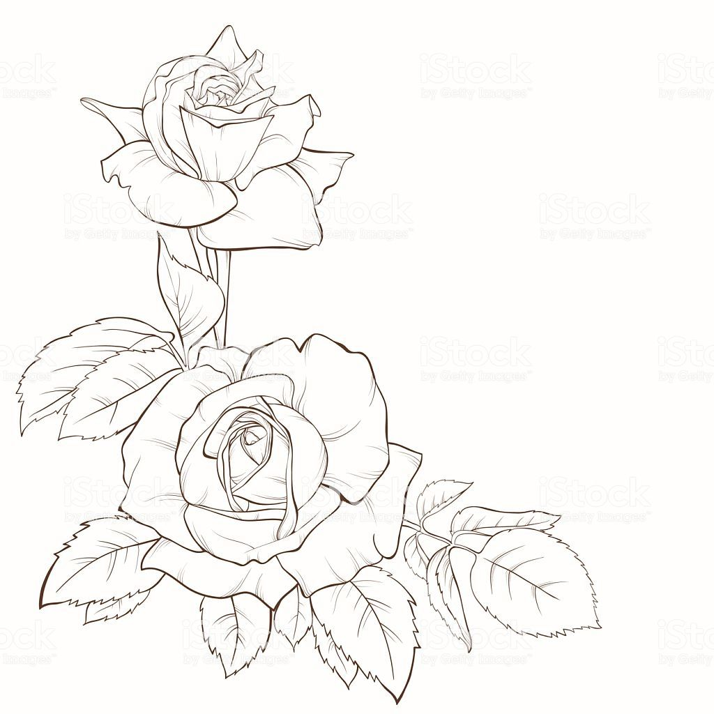 Rose Flower Hand Drawn Contour Lines And Strokes Element For Design Royalty Free Rose Flower Handdrawn Contour Lin Flower Drawing Roses Drawing Blossoms Art