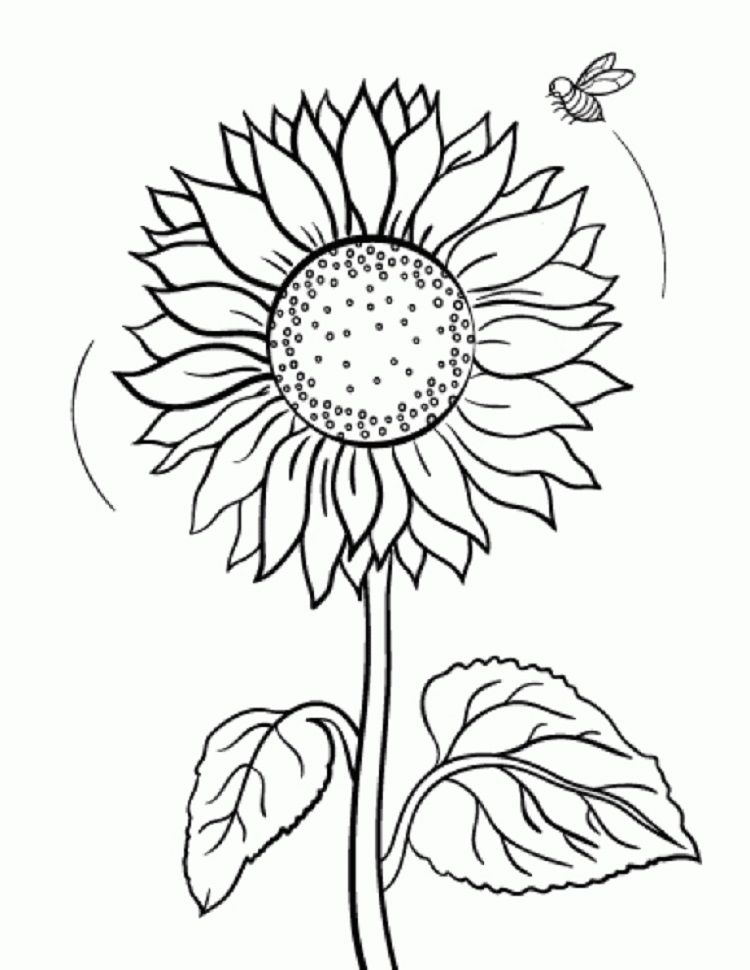 sunflower coloring pages | СЛЪНЧОГЛЕД | Bee coloring pages ...