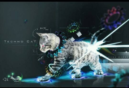 Techno Kitty - Stolen from TechnoLove FB pg