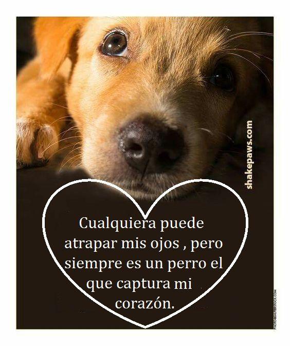 Mi Mascota Animales Frases Perros Frases Y Perros Felices