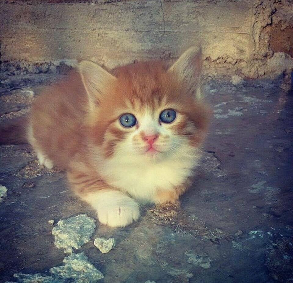 قطة ميدانية دمشق سوريا قطط Cats Damascus Syria Cats Damascus Syria Damascus