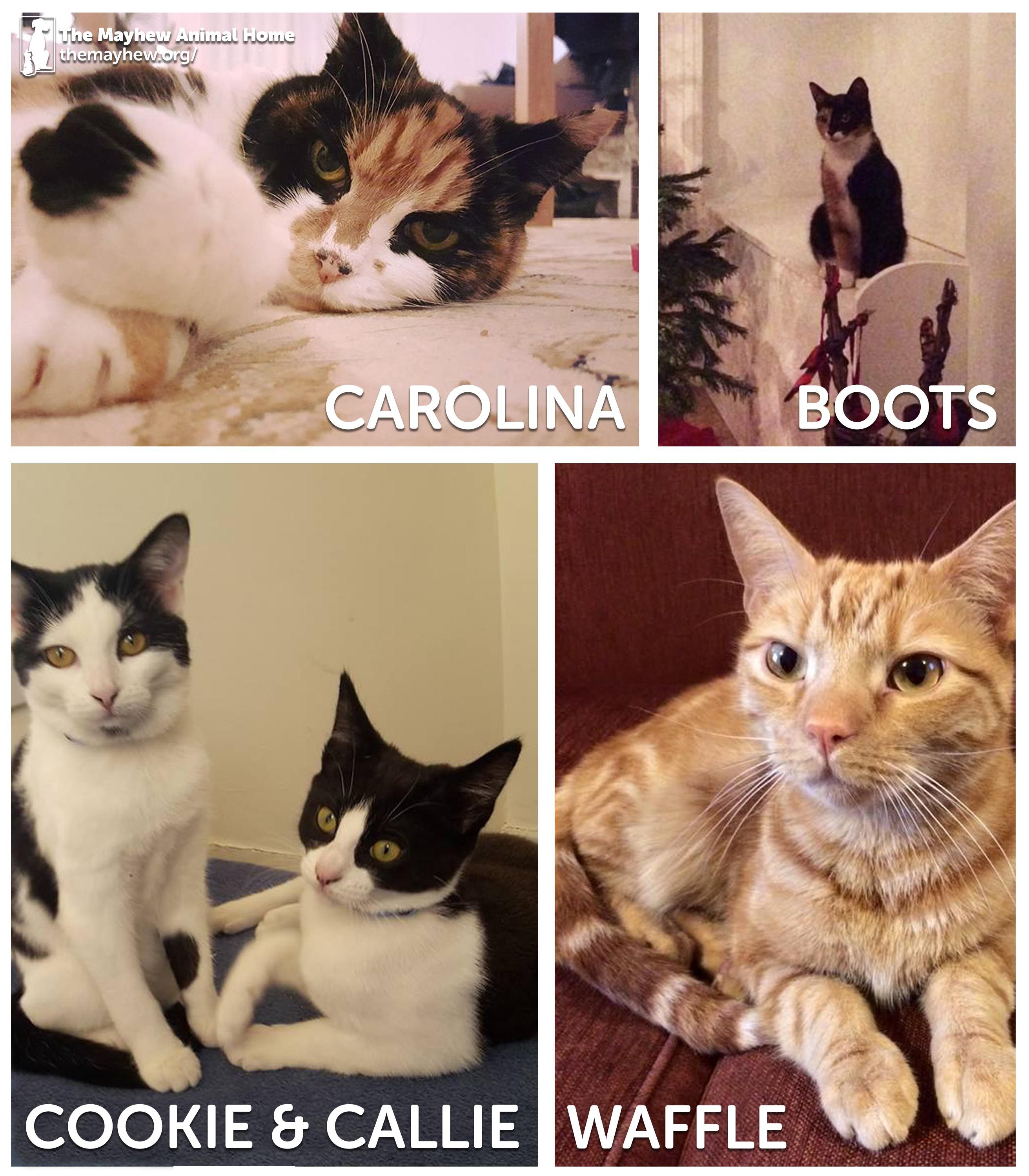 Just look at happily rehomed moggies Carolina, Boots