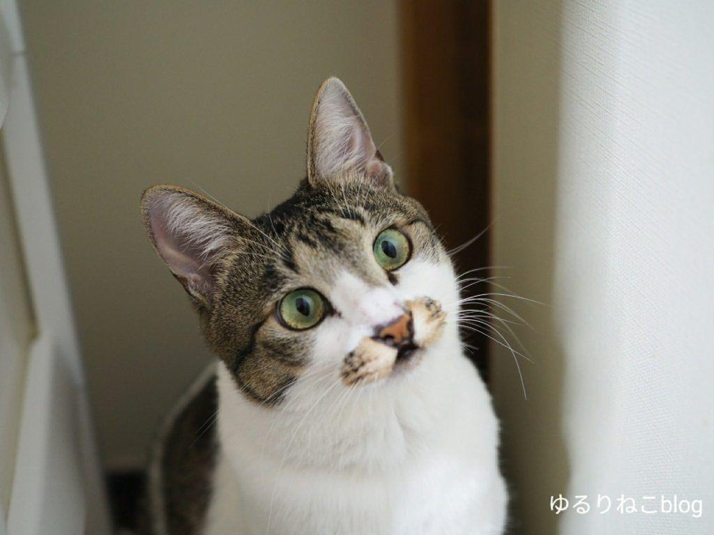 ペットが死んだ場合どこに連絡すればいいの 火葬までの段取りを解説するよ ゆるりねこblog ペット 子猫 珍しい動物