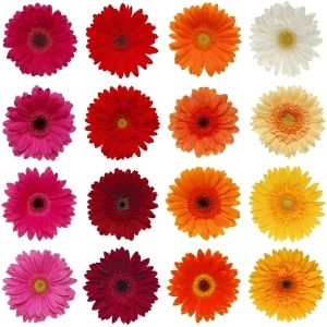 Gerbera Daisys are a great way of bringing in multiple shades of orange and keep the check book happy