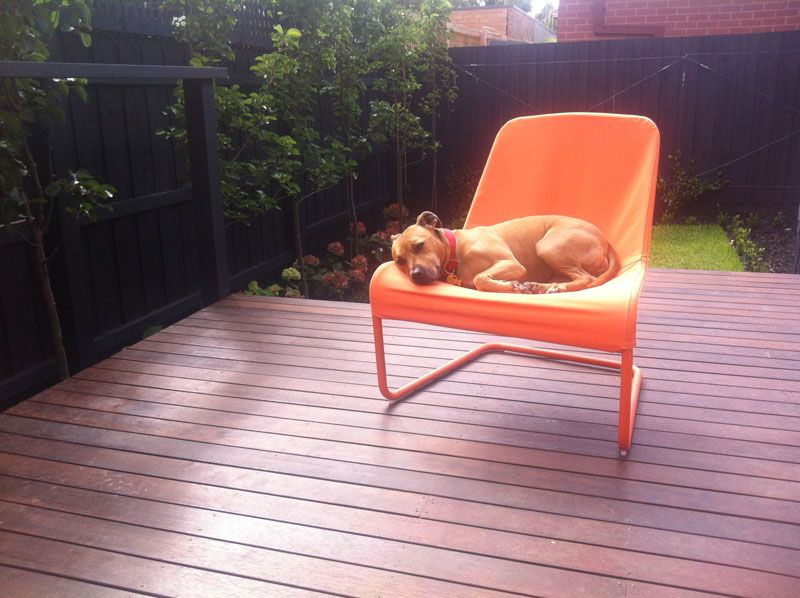 This is Kutaa (a Staffy X) enjoying the last days of the Melbourne summer sun. She is sitting on an Ikea LOCKSTA chair (super comfortable for pets and people)! - Alexandria, Melbourne AU