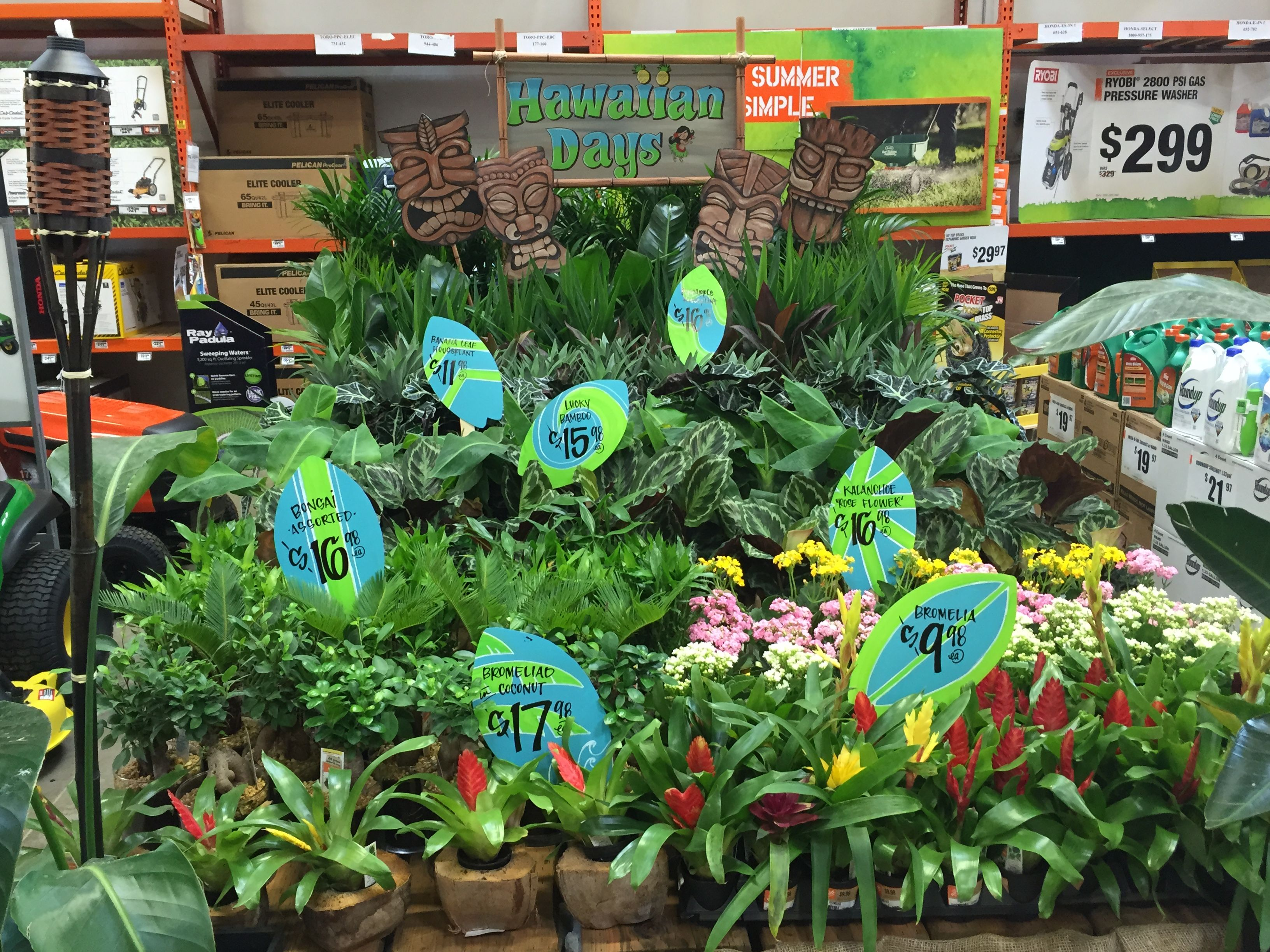 Pin By Bobbi Johnson On Home Depot Signs Garden Plants Home Depot