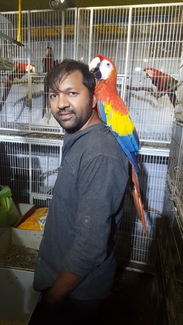 Scarlet Macaw Tame Call 01689090909 Macaw Pet Shop Parrot