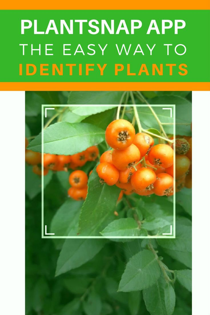 PlantSnap App Review How To Identify Plants Fast