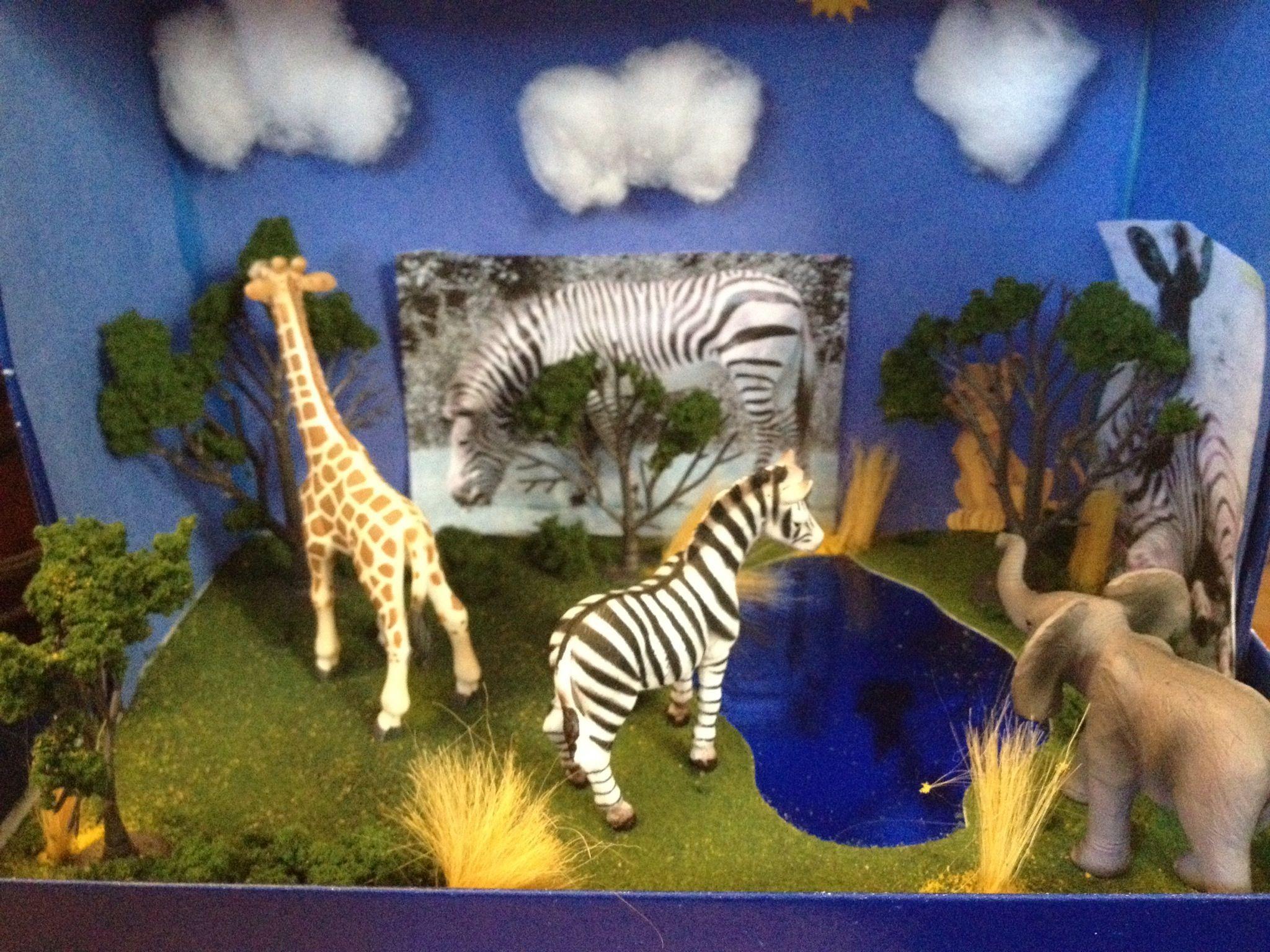 Zebra Diorama For 3rd Grade