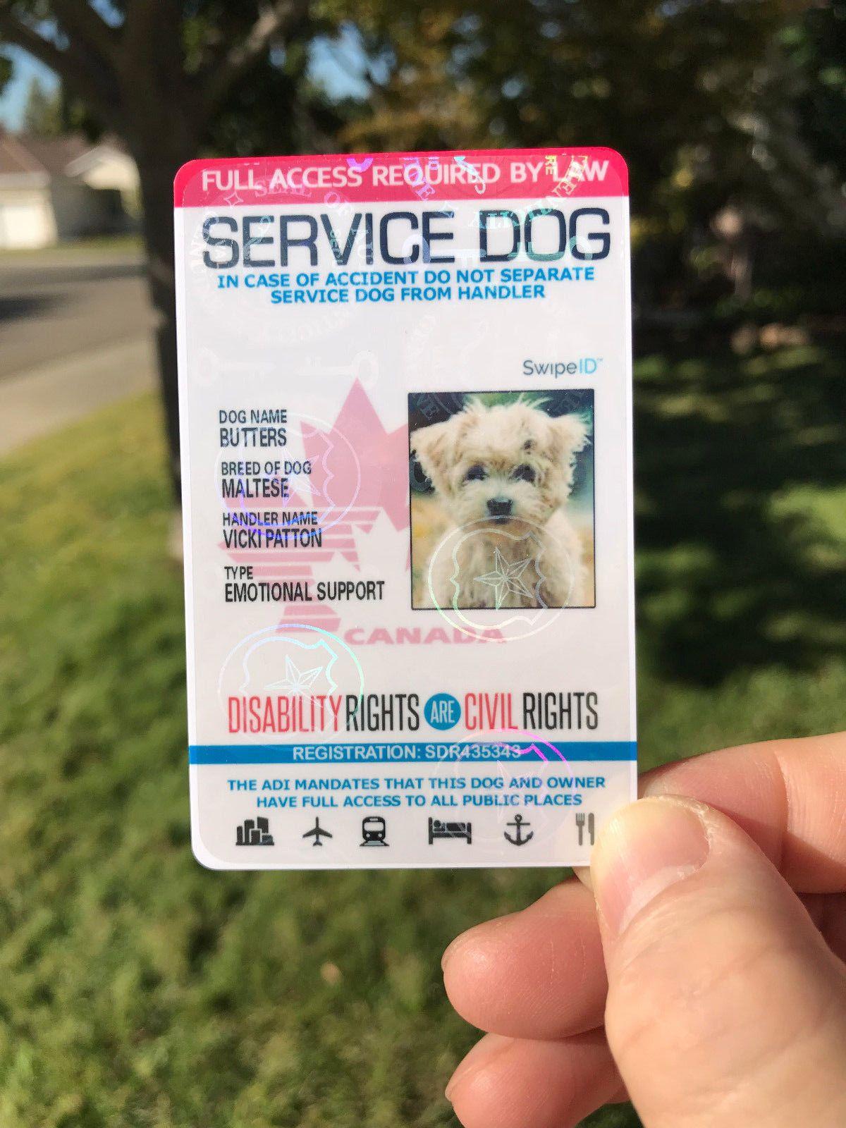 11 99 Holographic Canada Canadian Service Dog Id Card Badge Adi