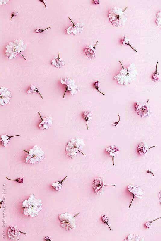 Pin Oleh Tng Dii2701 Di Linhhh Tinhhhh 3 Bunga Sakura Pola Bunga Wallpaper Bunga