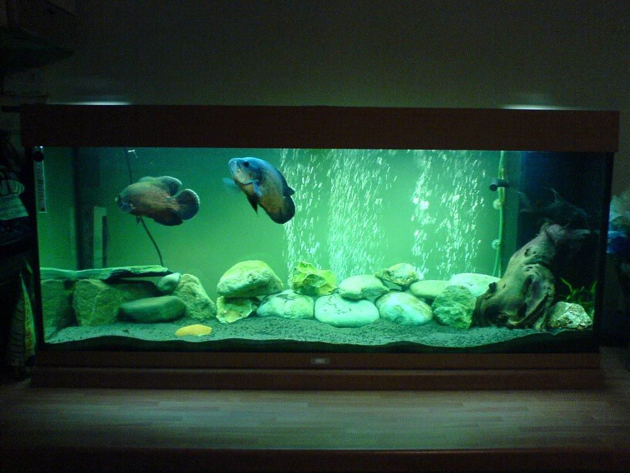 Aquarium decoration for oscar fish aquarium plants for Aquarium decoration diy