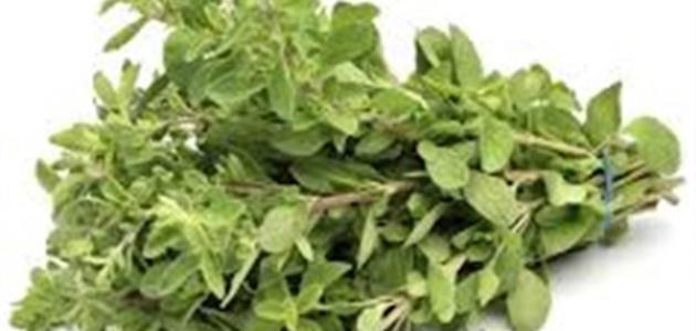فوائد الميرمية والبردقوش موسوعة موضوع Herbs Seeds Marjoram