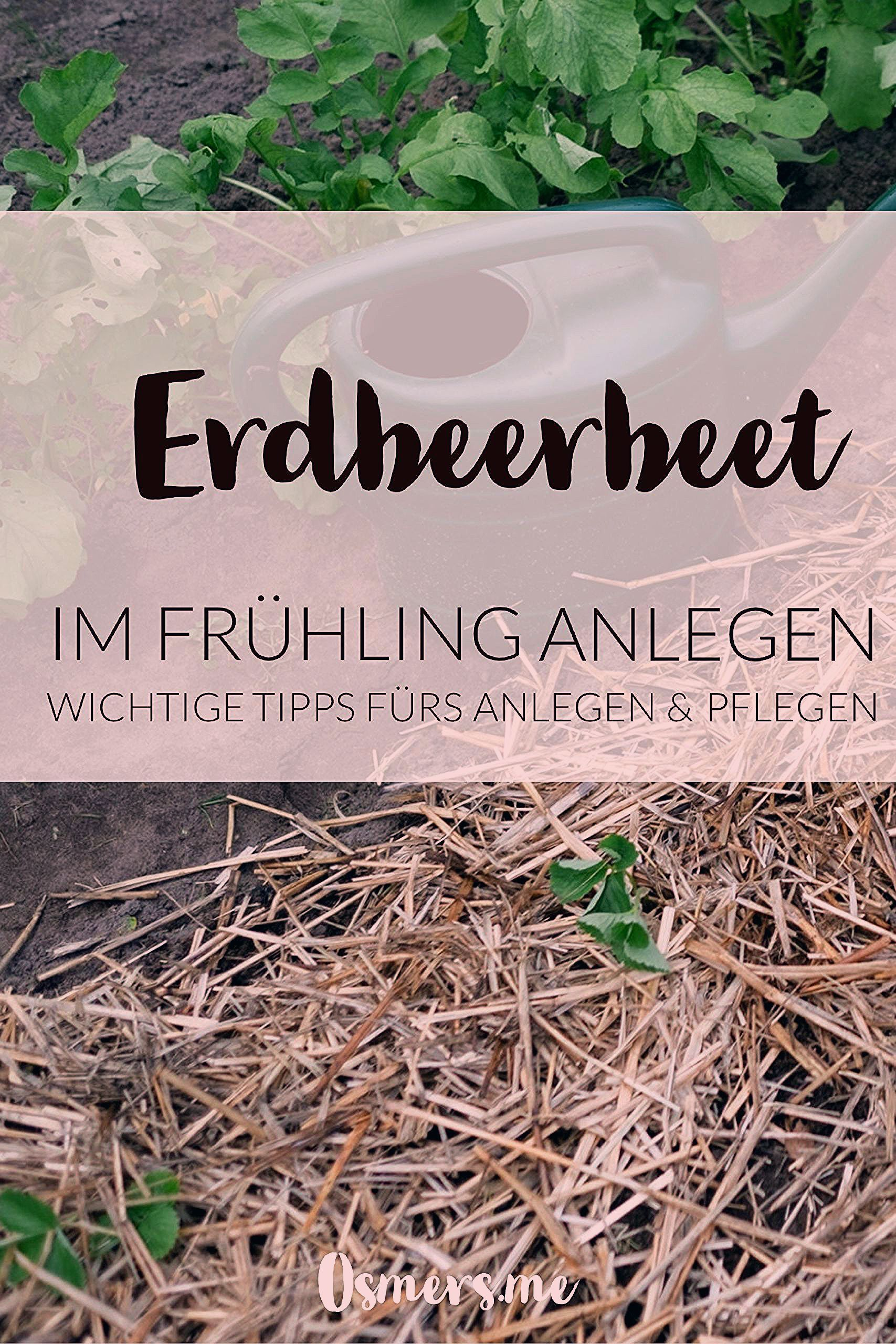 Photo of Neues Erdbeerbeet anlegen – Osmers Garten