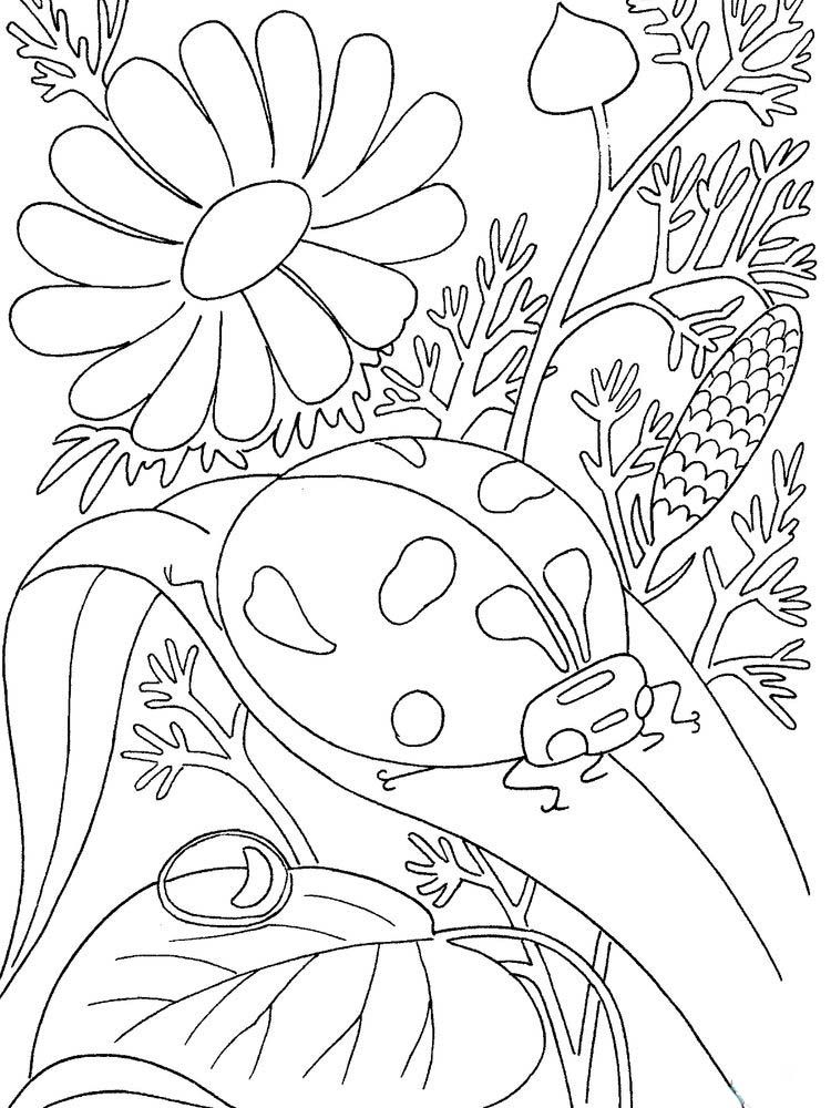Ladybird Coloring Pages To Print Ladybird Is Part Of The Large Family Of Coccinellida Printable Flower Coloring Pages Bug Coloring Pages Insect Coloring Pages