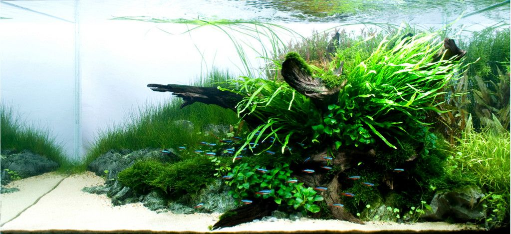 I love clean sand in aquascapes I