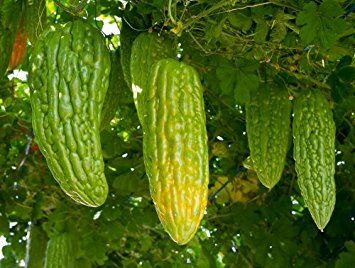 how long does it take for cucumber seeds to germinate (с ...