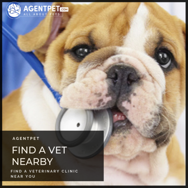 Find A Veterinary Clinic Near You Visit Www Agentpet Com Pets And