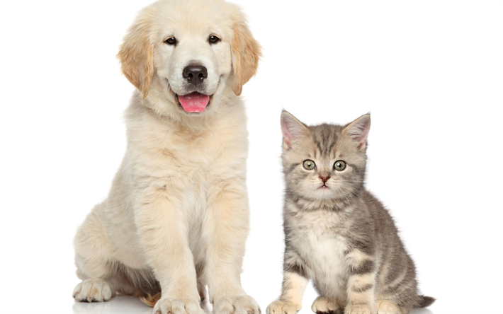 Download Wallpapers Puppy And Kitten Friendship Cute Animals Retriever Dog Cat White Retriever Puppy Besthqwallpapers Com Cute Cats And Dogs Animals Dog Cat