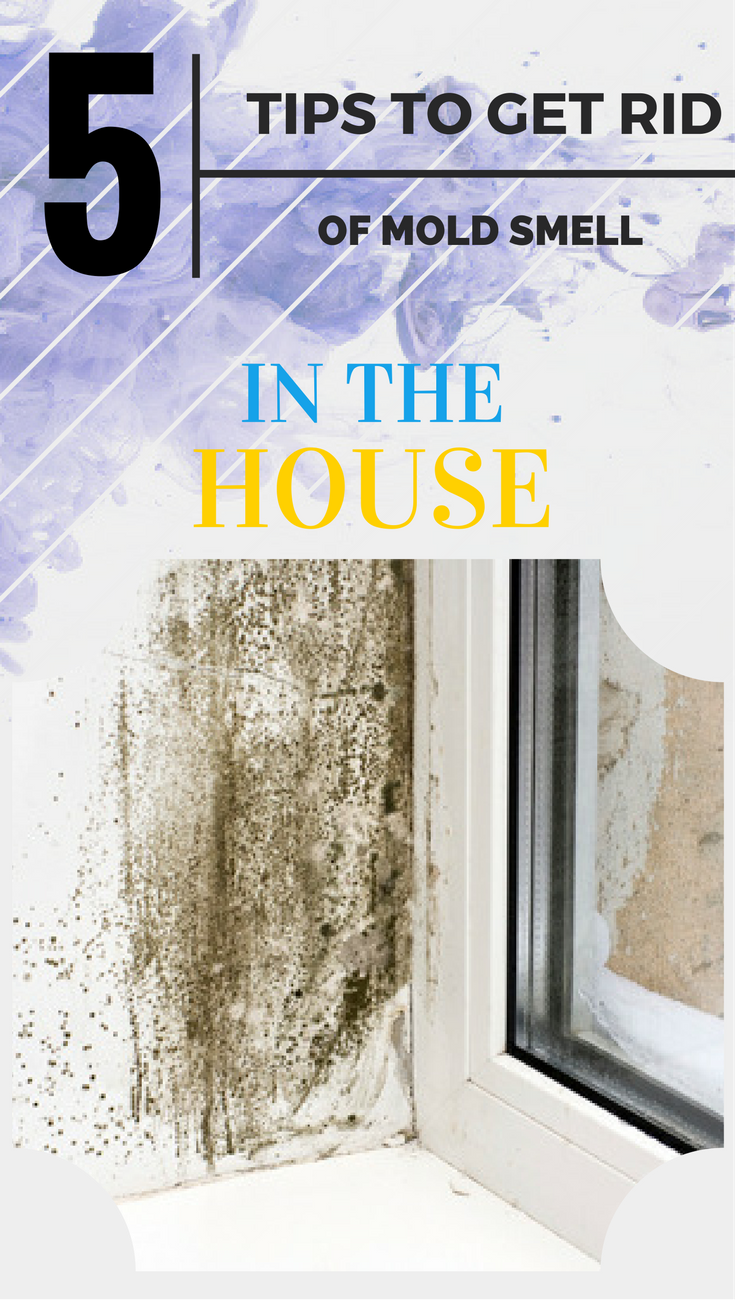 9455a5d9e3a86cd3ccfa0f87941fb657 - How To Get Rid Of The Mold In The House