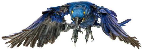 Photo from Andrew Zuckerman's latest book, Bird.