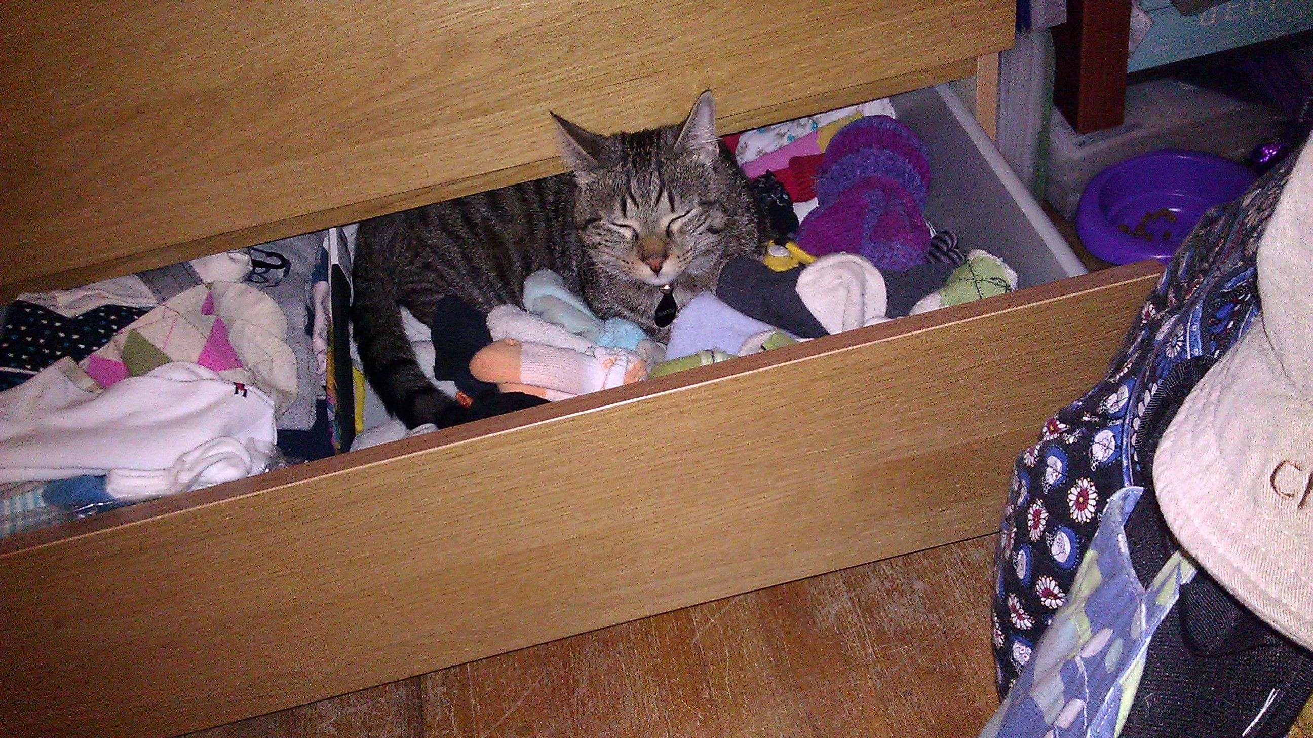 Open drawer...comfy bed.