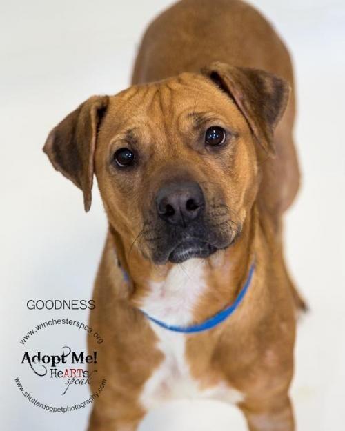 Adopt Goodness On Pitbull Terrier Bull Terrier Dog Terrier Dogs